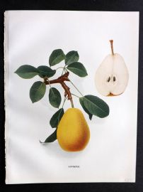 Hedrick - Pears of New York 1921 Fruit Print. Lawrence.